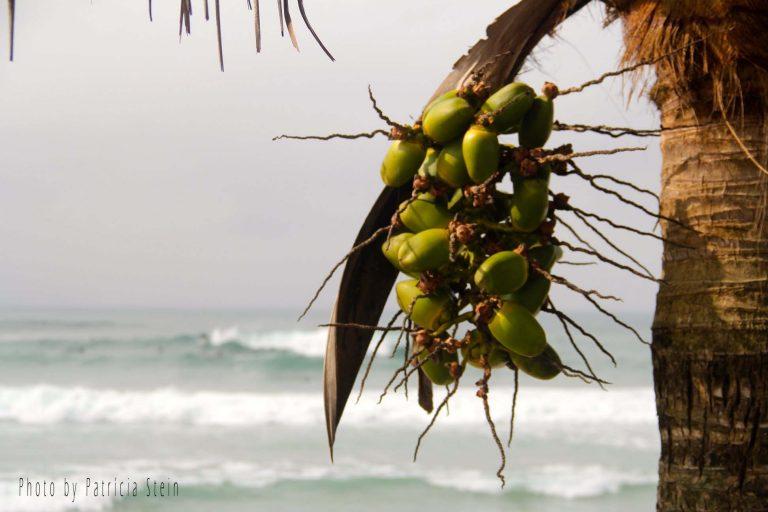 praianha1